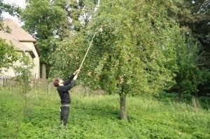 Fred beim Apfleplücken